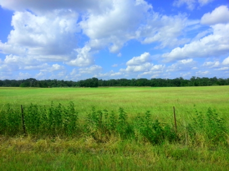 central-texas-land-for-sale-owner-finance-WA6